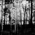 Espoo Wald