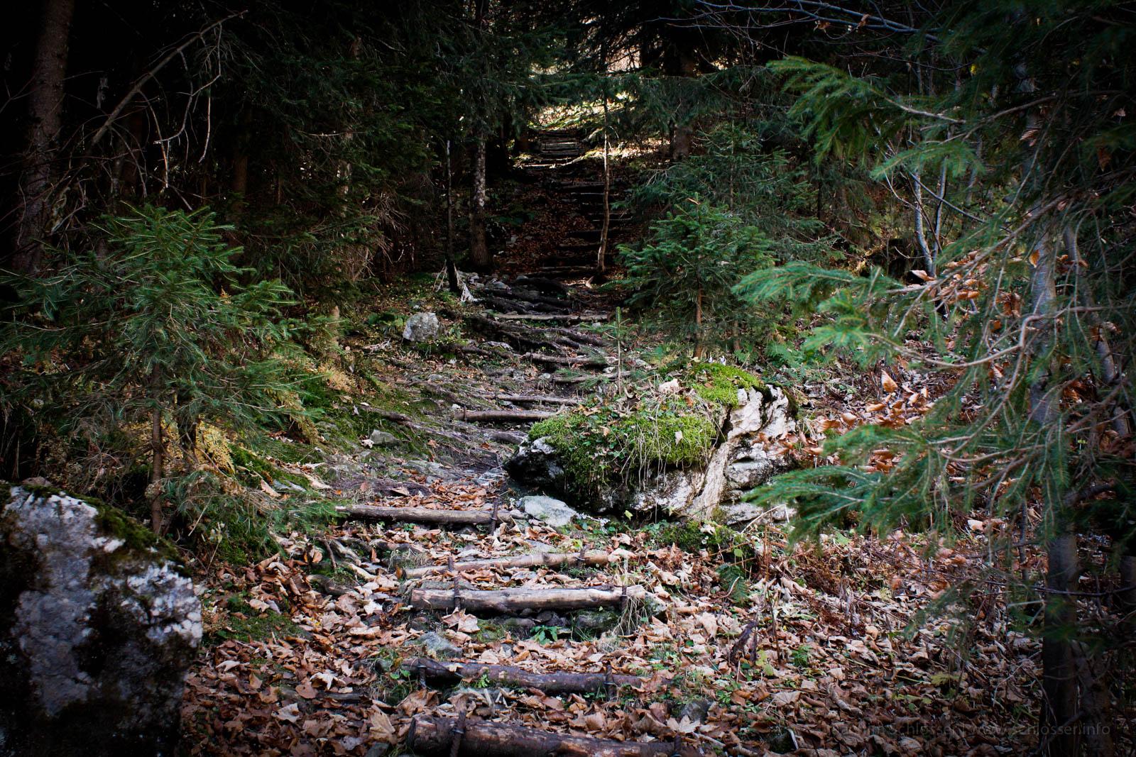 Holztreppe Wald