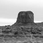 Monument Valley - Pferde