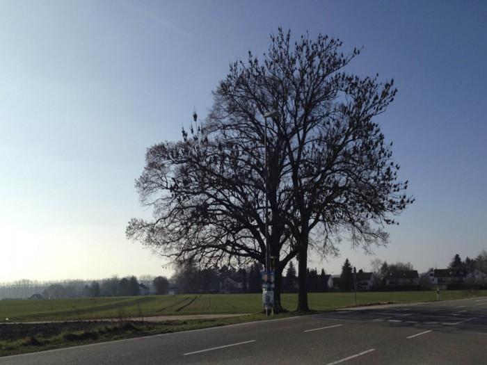 Wahlplakat unterm Baum